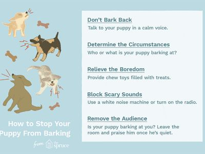10 Tips to Stop a Barking Puppy
