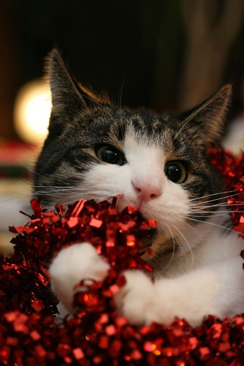 55 of Funny Animals Cutely Enjoying Christmas