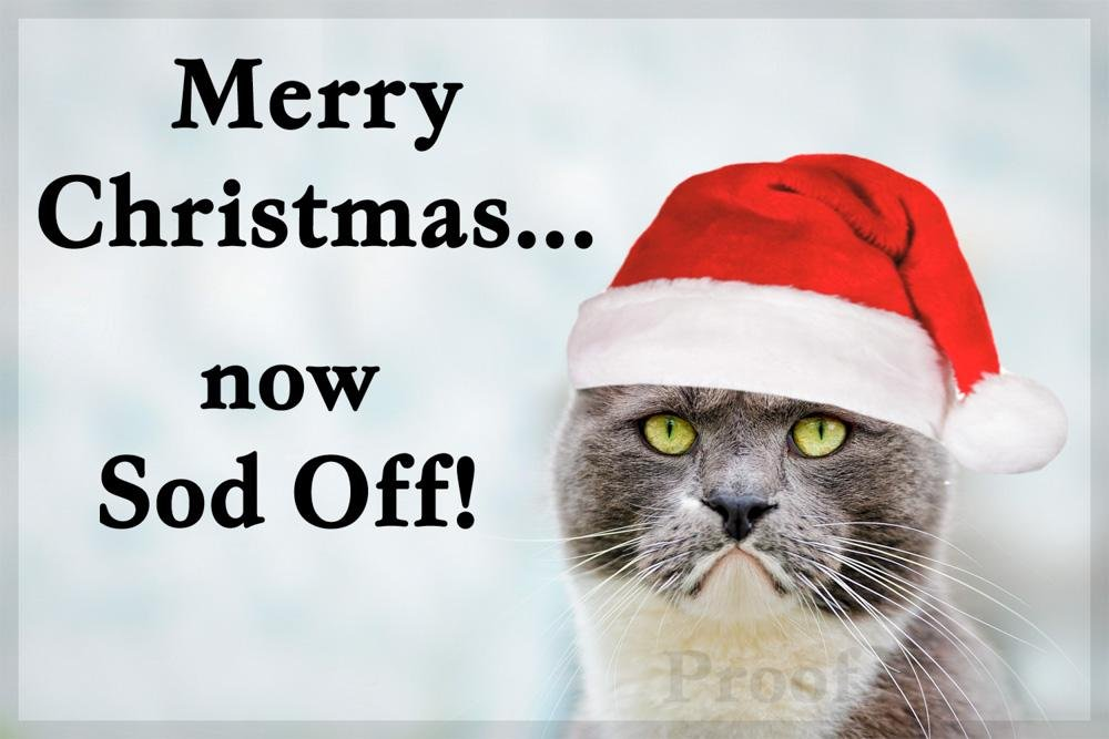 Get the Stunning Funny Cat Pictures Christmas