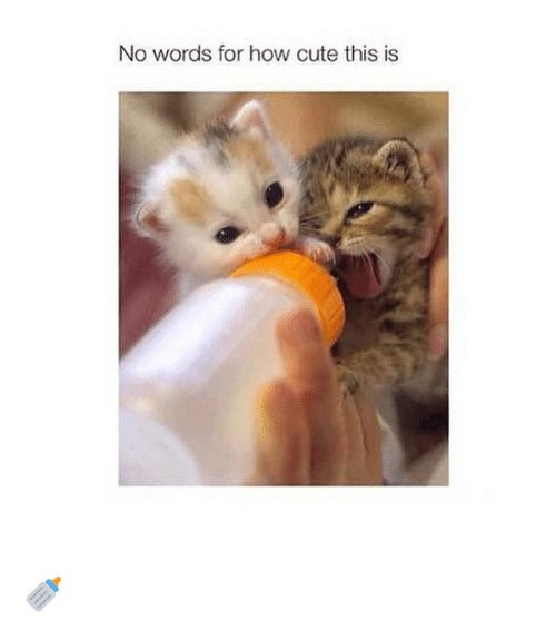 Cute Funny and Word No words for how cute this is 🍼