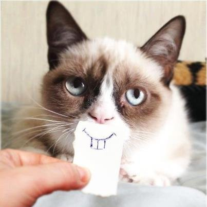GrumpyCatIs Finally Happy Very Cute Cat Happy Birthday Meme