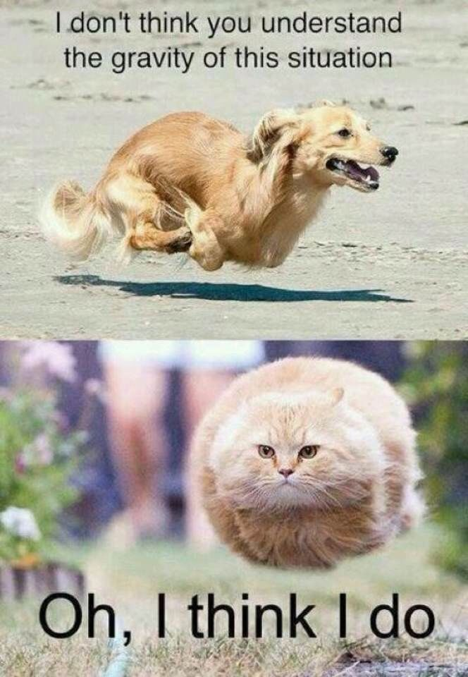 Top 30 Funny animal Memes Humorous the right partners Description from pinterest