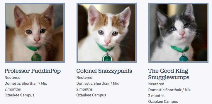 This animal shelter just won the Internet with its creative cat names