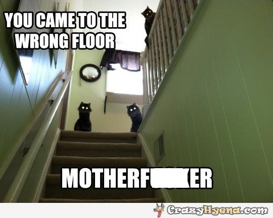 creepy black cats wrong floor