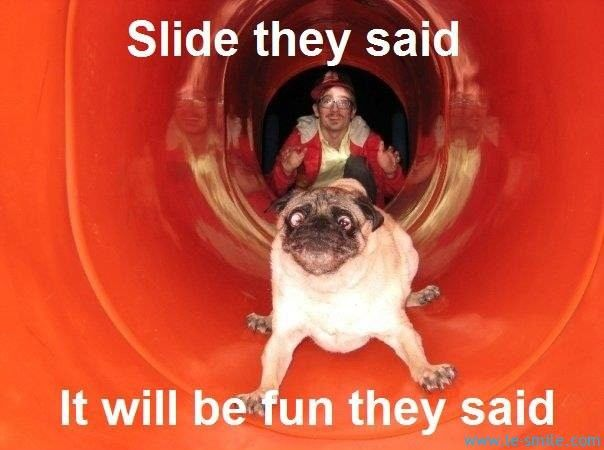 Slide they said This dogs face is so funny