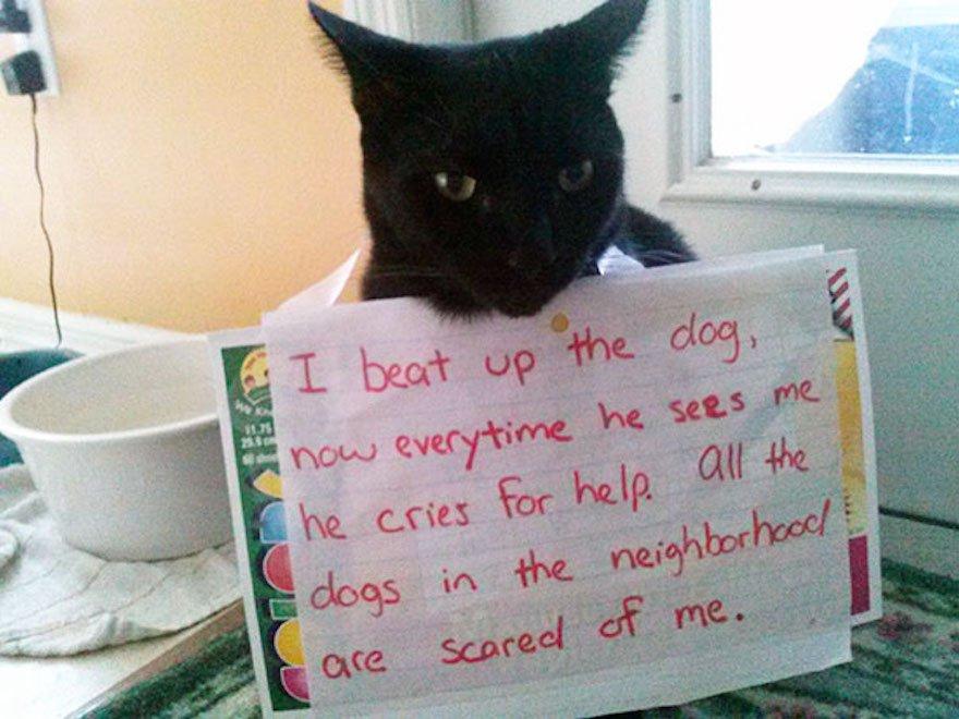 cat shaming 37 605