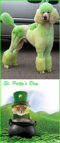 Dogs and Cats both love St Patrick s Day greenalltheway potofgold luck