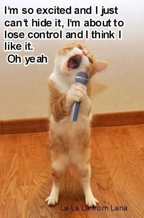 Image result for so very excited quotes Funny Cats Silly Cats Funny Memes