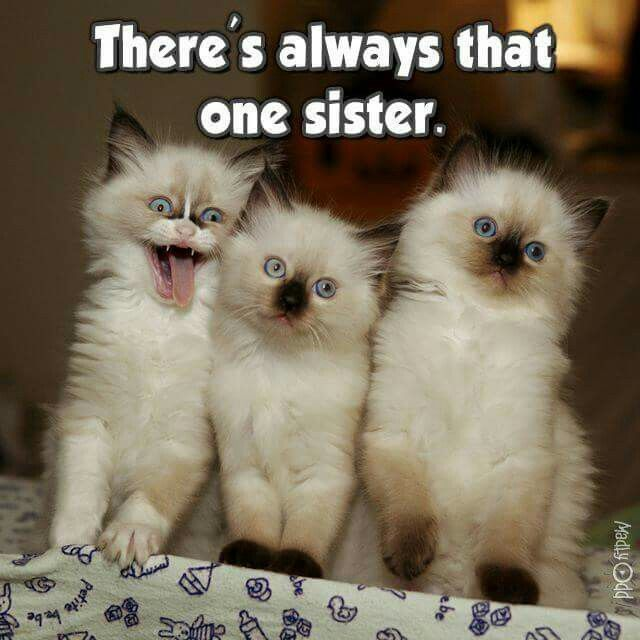 Funny Cat s Have a Laugh Today too cute Pinterest