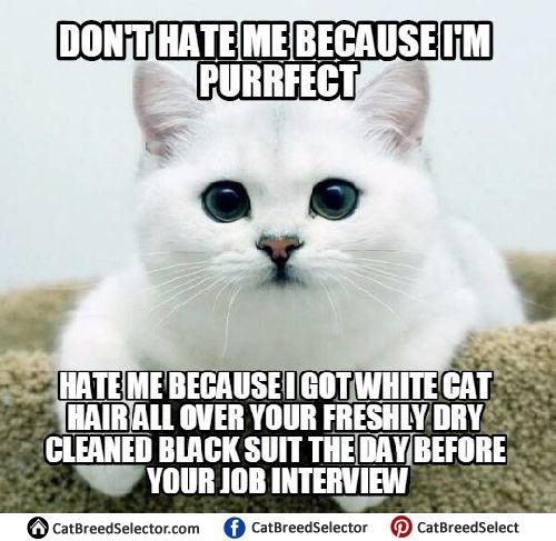 Funny White Cat Memes