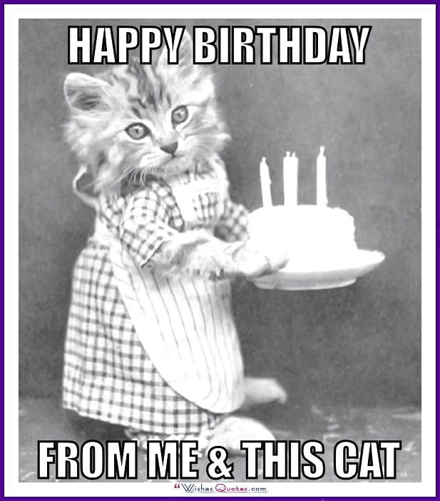Birthday Meme with a Cat From me and this cat
