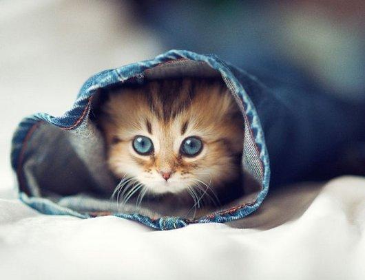 62fd6 worlds cutest kitten daisy cat photos1 Super Cute Kitten Pics