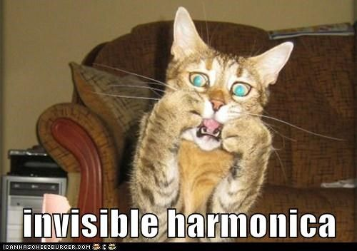 Music captions invisible Cats harmonica