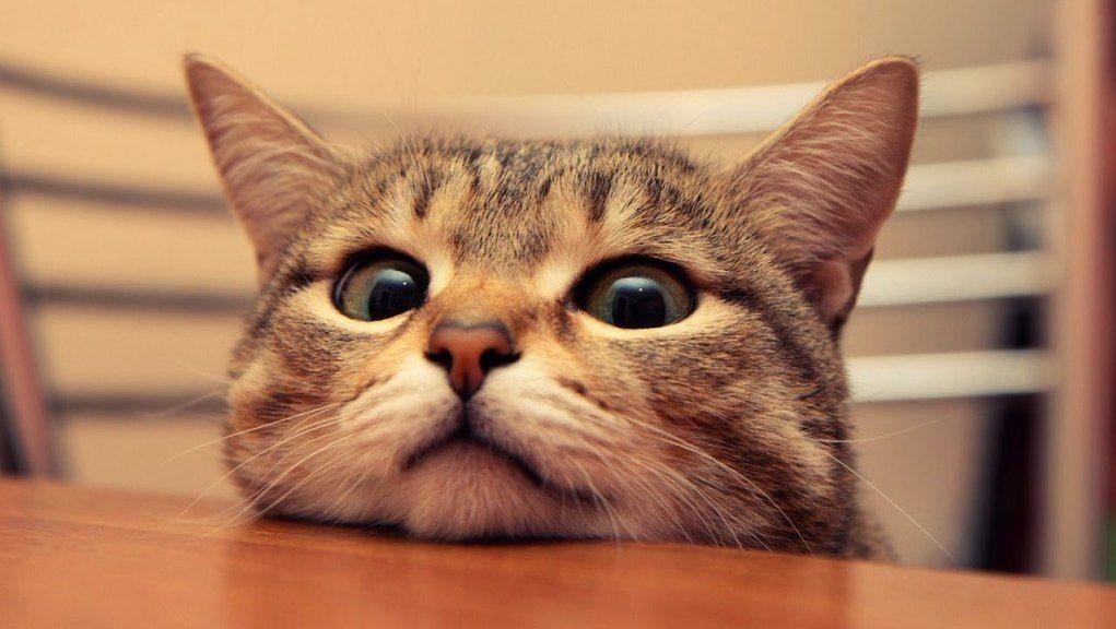 Funny Cat Jokes2