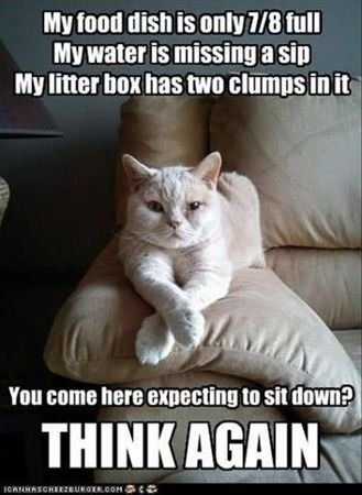 Top Funniest Cat Memes Pinterest Plus Funny Animals With Captions