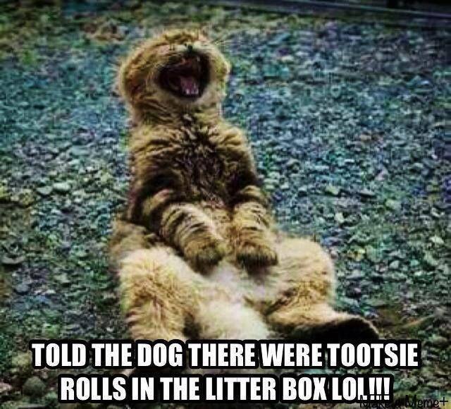 Funny cat vs dog meme