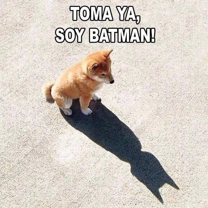 Funny Batman Memes Hilarious Animal Memes Funny Dog Jokes Memes