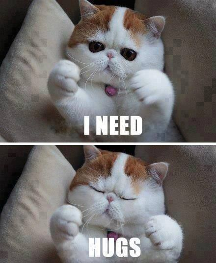 I need hugs cats animals