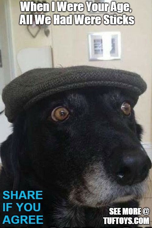 funny old dog picture wearing flat cap