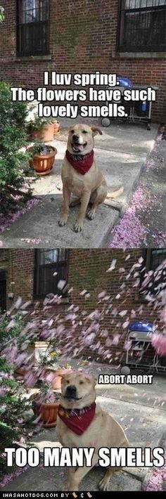 See The Inspirational Funny Rainy Day Dog Pictures Hilarious Pets