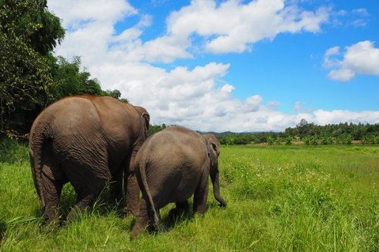Lanna Kingdom Elephant Sanctuary Chiang Mai 2018 All You Need to Know BEFORE You Go with s TripAdvisor