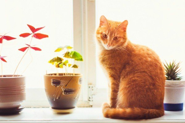 An orange cat sitting on a window sill