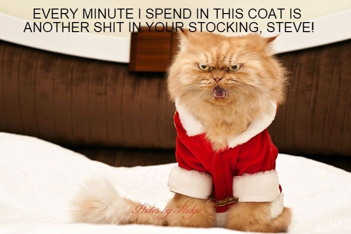 Pissed off cats in the holiday spirit