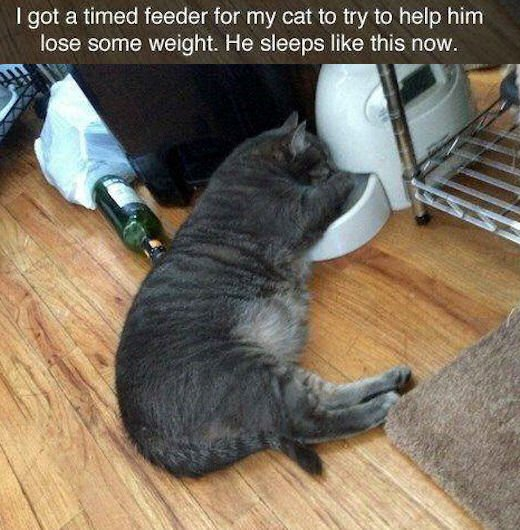 I Got A Timed Feeder For My Cat To Help Him Lose Weight He Sleeps Like This Now