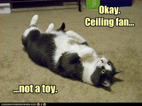 bad idea Cats ceiling ceiling fan FAIL fall fan fly toy