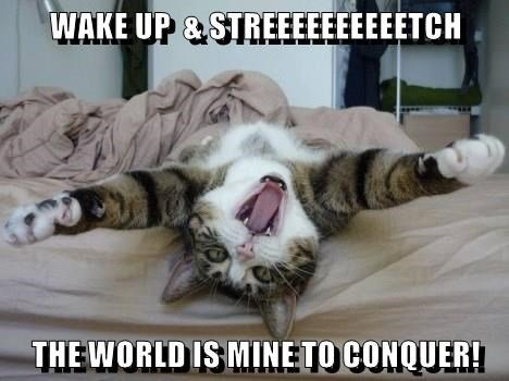 animals world cat wake up conquer caption stretch