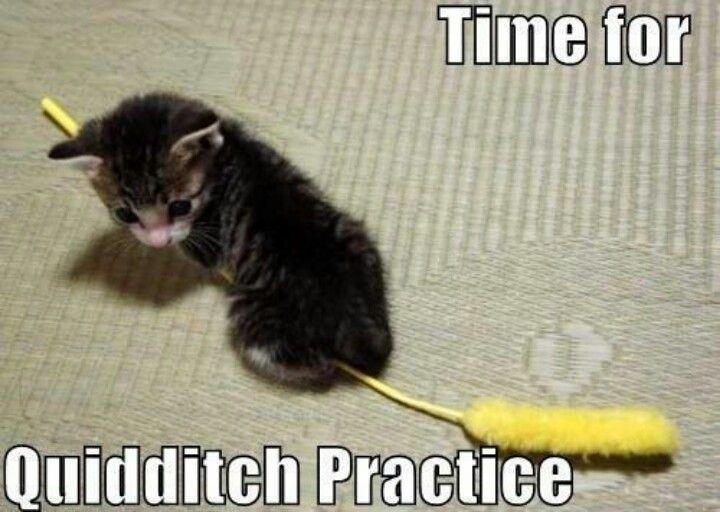 Harry potter meme such a cute little kitten