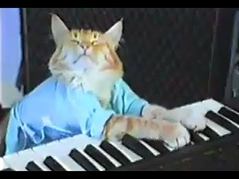 Charlie Schmidt s Keyboard Cat THE ORIGINAL
