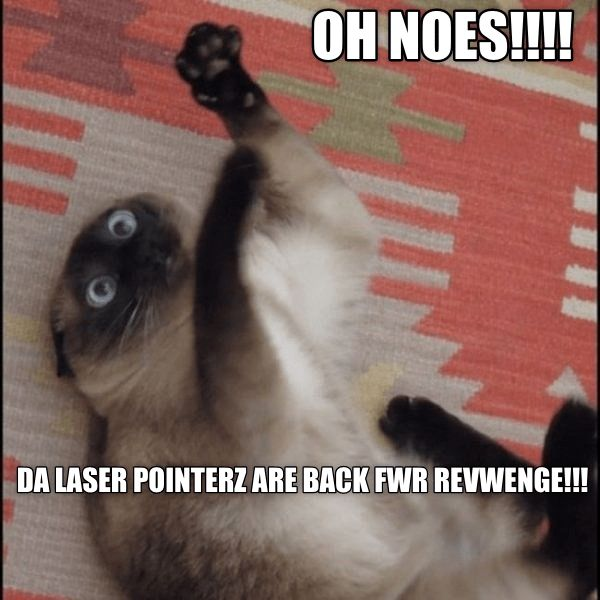 cat fighting off an invisible laser pointer enemy