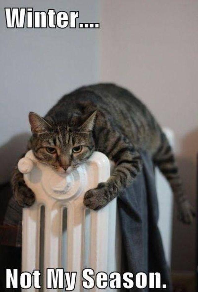Afbeeldingsresultaat voor wat is het koud grappig You And Me Kittens Cutest Cats And