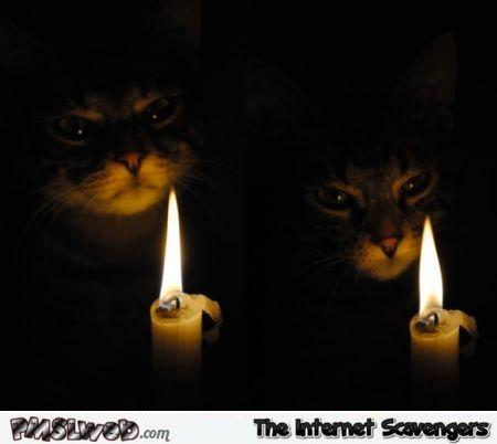 Funny Halloween cat