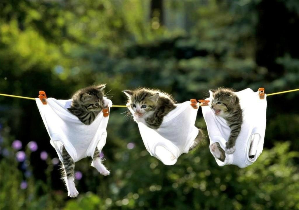Beautiful Funny Cats HD Wallpapers