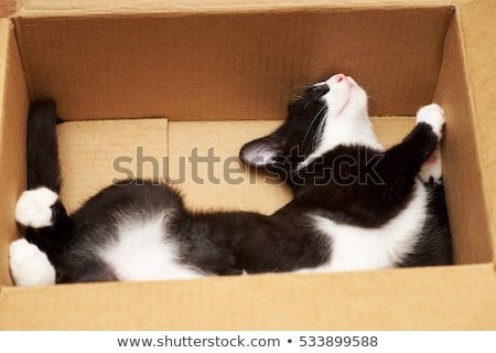 Funny cat lover boxes