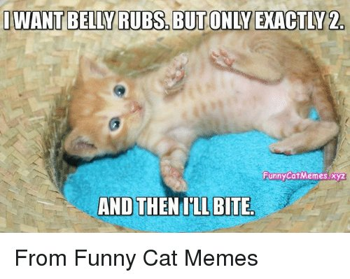 Memes 🤖 and Bite I WANT BELLY RUBS BUT ONLYEXACTLY2 Funny From Funny Cat Memes