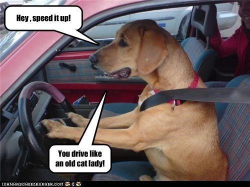 Dog Quotes Funny Funny Dog Pics Dog Memes Funny
