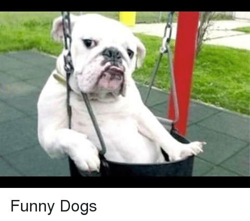 Dogs Funny and Funny Dogs Funny Dogs