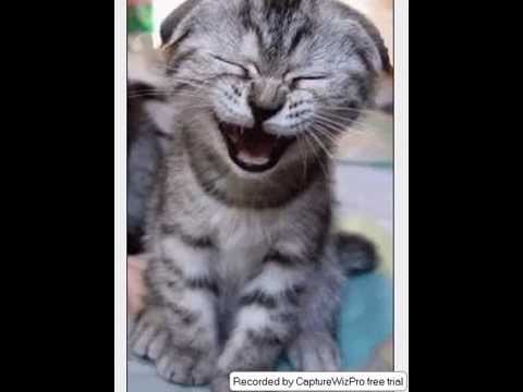 funny animated cats & animals002