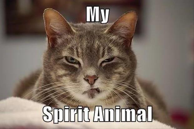 Best 25 Funny Animal Memes