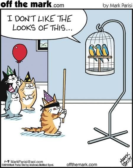 Why cat birthday parties should be supervised Cat Jokes Cats Humor Funny Cat