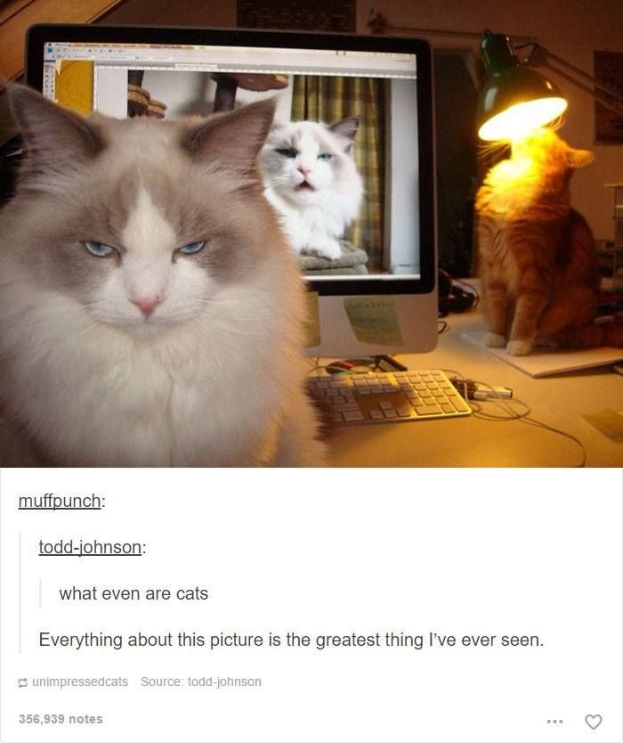 Cats have ruled the internet for a long time so here s a huge collection of hilarious cat memes to brighten your day