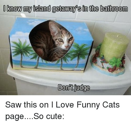 Cats Memes and 🤖 know my island aways in the bathroom Donot judge
