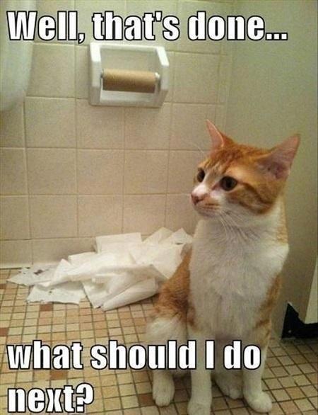 Funny Cat Pics followed