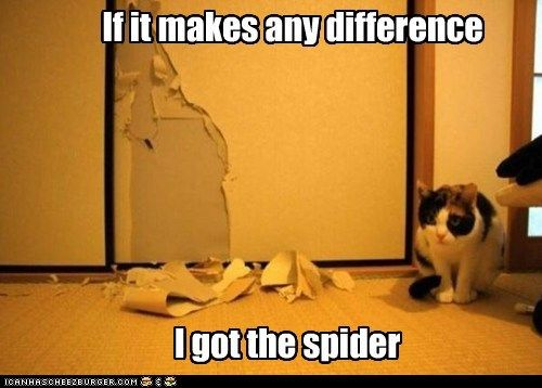 spider wallpaper Cats