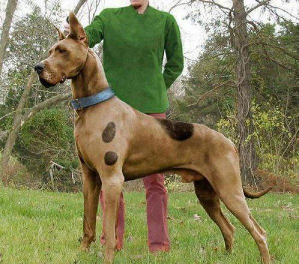 Cool crazy and funny ideas for you to dress up your doggies this next Halloween Check out more at