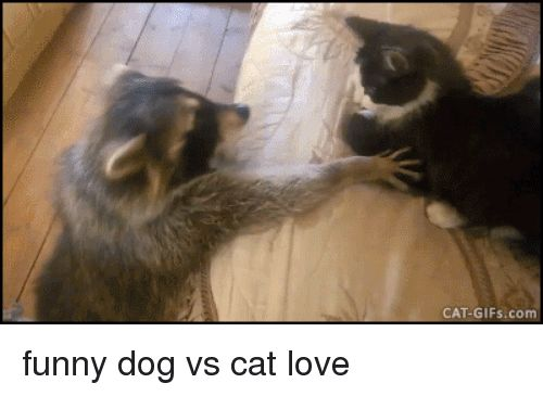Funny Love and Gifs CAT GIFs funny dog vs cat