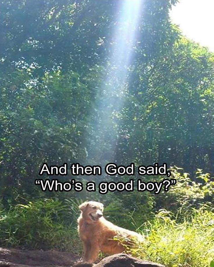 Funny Animal The Day – 22 Pics Animal Memes Animal Pics Humor